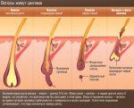 Как остановить рост волос – Как замедлить рост волос на голове, теле у мужчин и женщин: эффективные средства